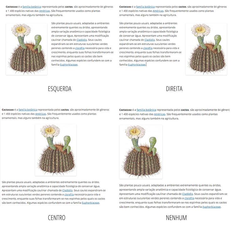 alinhamento-imagens-bueno-sites-wordpress-5